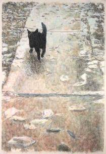 Black kitten footpath